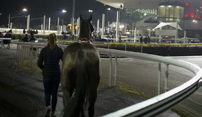 Irish Racecourses: Dundalk Stadium