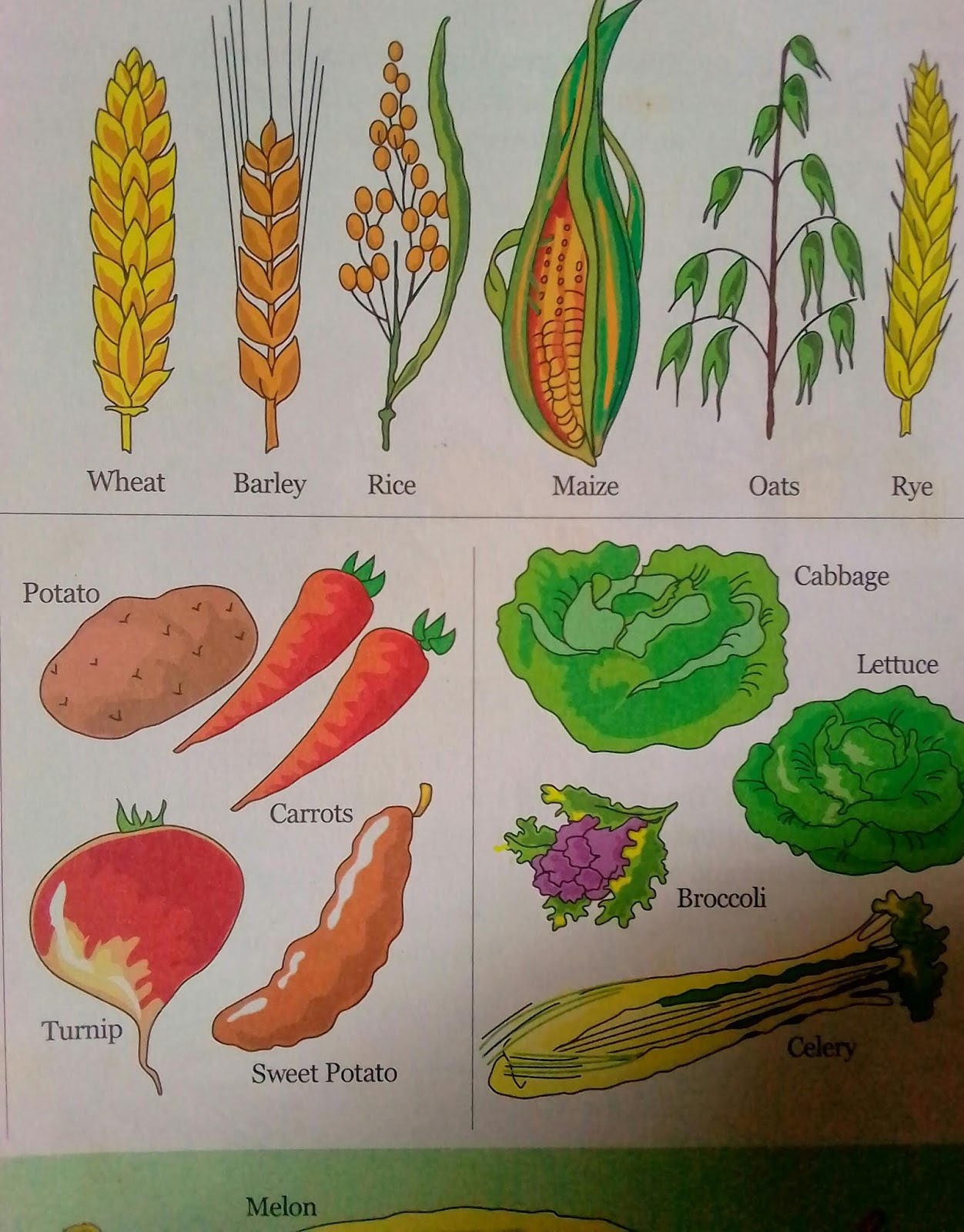 Open Learning Centre: CLASSIFICATION OF CROPS