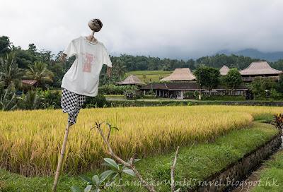 Jatiluwih rice terrace, bali, 峇里