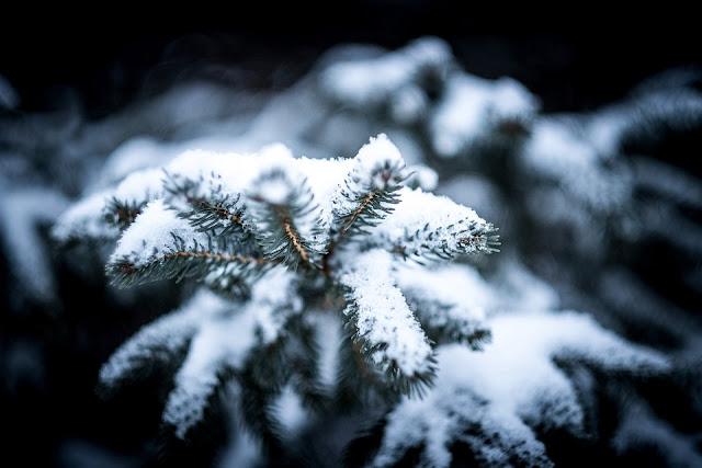 goldandgreen-christmas-tag-neige