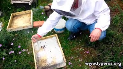 Ο ζεόλιθος και οι μέλισσες.