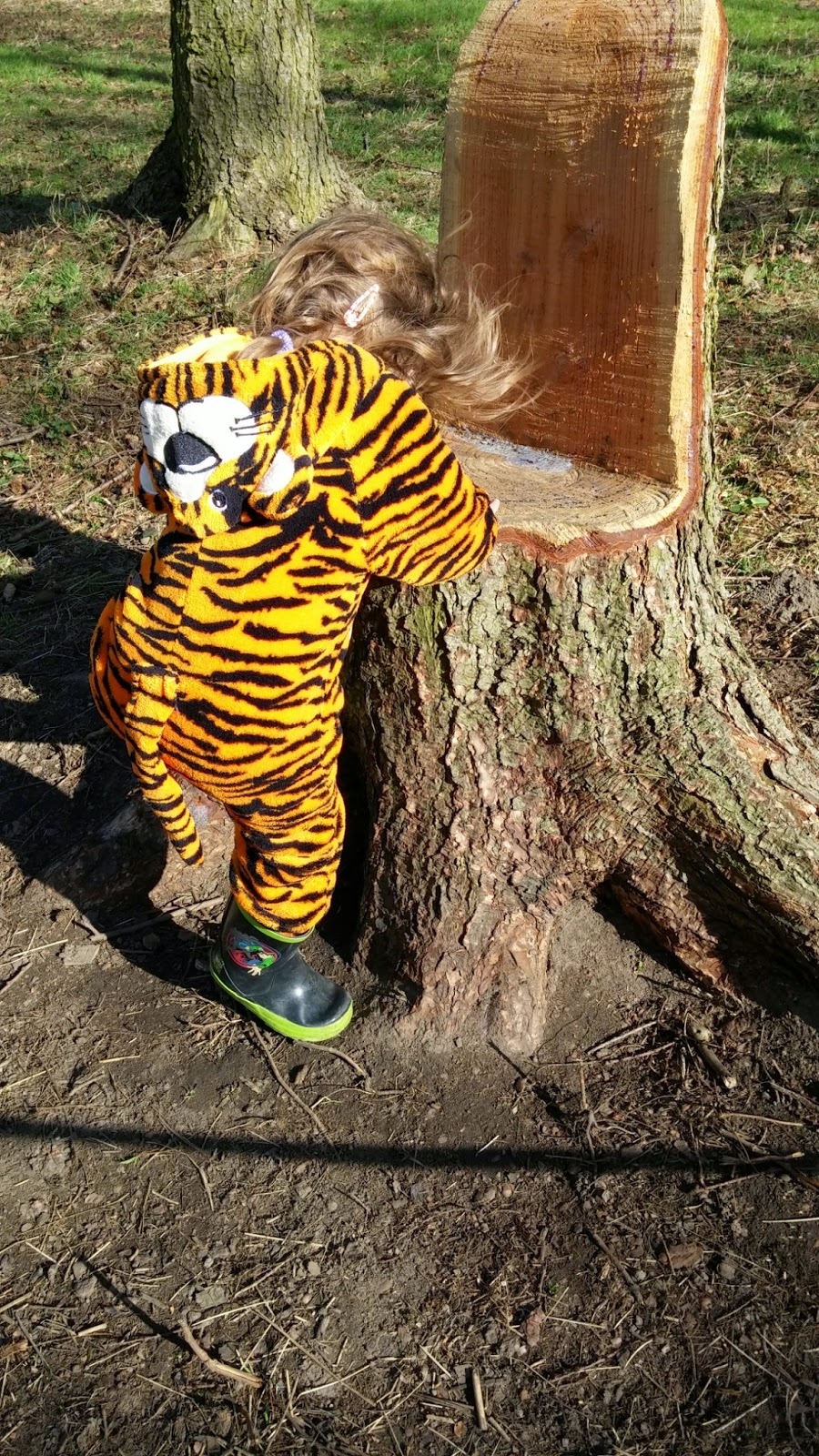 Tiger climbing up the tree