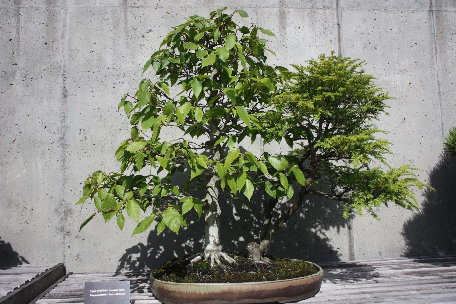 Garden Thyme With The Creative Gardener The Art Of Bonsai