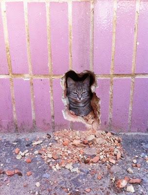 gato asomandose en pared rota.
