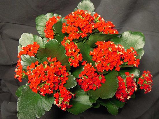 berbagai jenis tanaman pengisi yang biasa di gunakan pada taman vertikal
