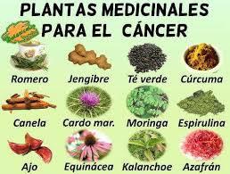 plantas medicinales para el cancer