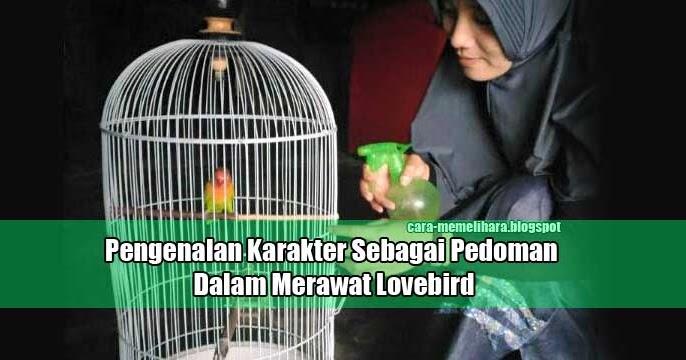 pengenalan karakter sebagai pedoman dalam merawat lovebird