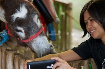 Ark Avilon Zoo - Donkey Selfie