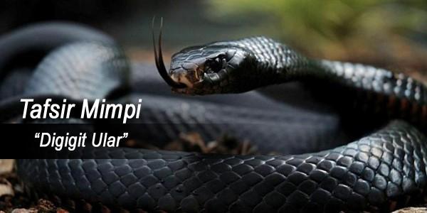 Togel mimpi digigit ular berbisa