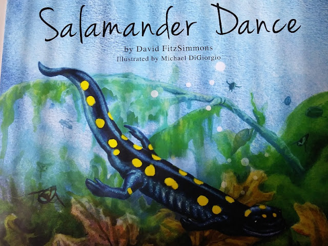 yellow spotted salamander facts