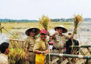 Tradisi Pesta Panen Birue, Budaya Lokal Yang Masih Terpelihara Sampai Sekarang