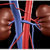 How to keep your Kidney healthy