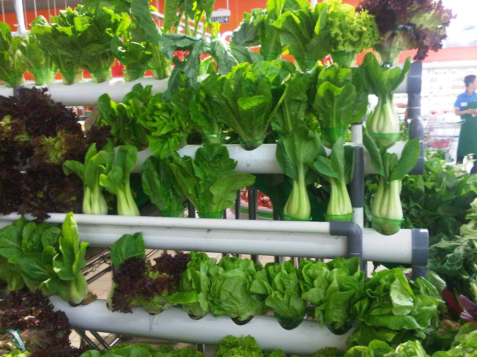 how to grow organic vegetables in pots home design ideas and