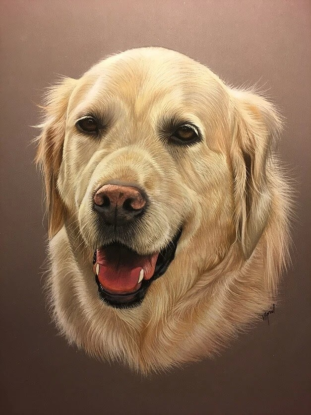 06-Golden-Retriever-Virginie-Agniel-Pastel-Drawings-of-Cats-and-Dogs-www-designstack-co