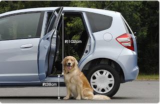 cães em veículos
