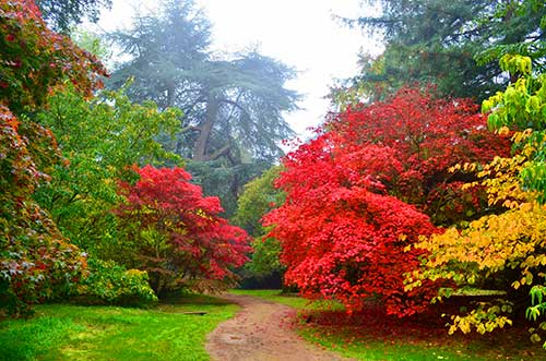 University of Oxford Botanic Garden, Oxford, UK.