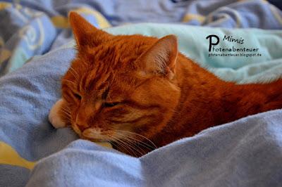 Katze Mimi schläft im Bett