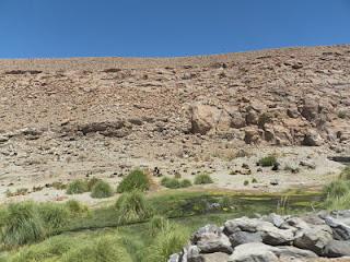 Puritama Atacama