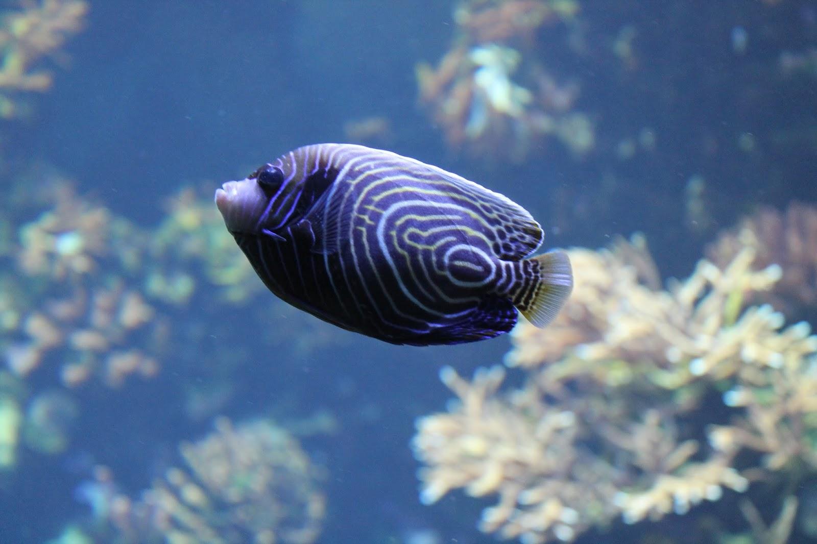 ile de la réunion aquarium