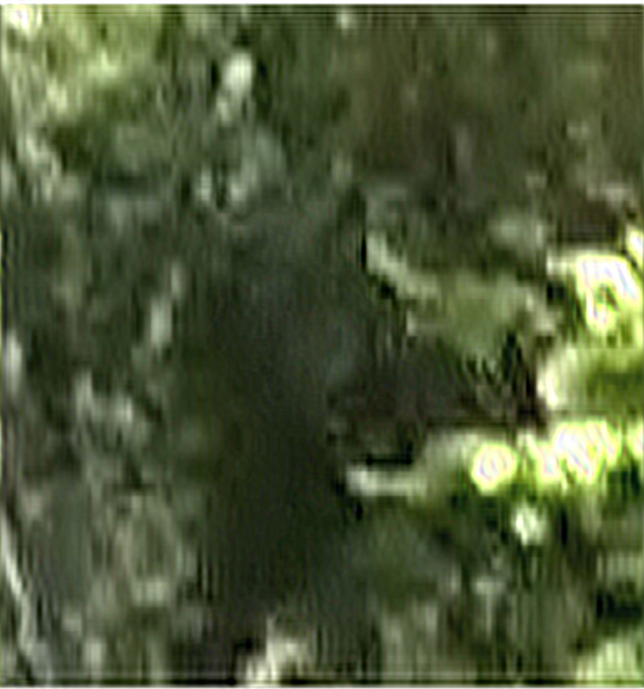 Dogman - The Monsters are Real: Possible Dogman Captured