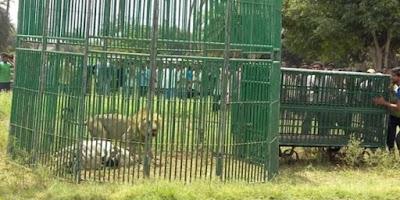 Cuma di India Lima Hewan Malang Ini di Penjara Layaknya Penjahat
