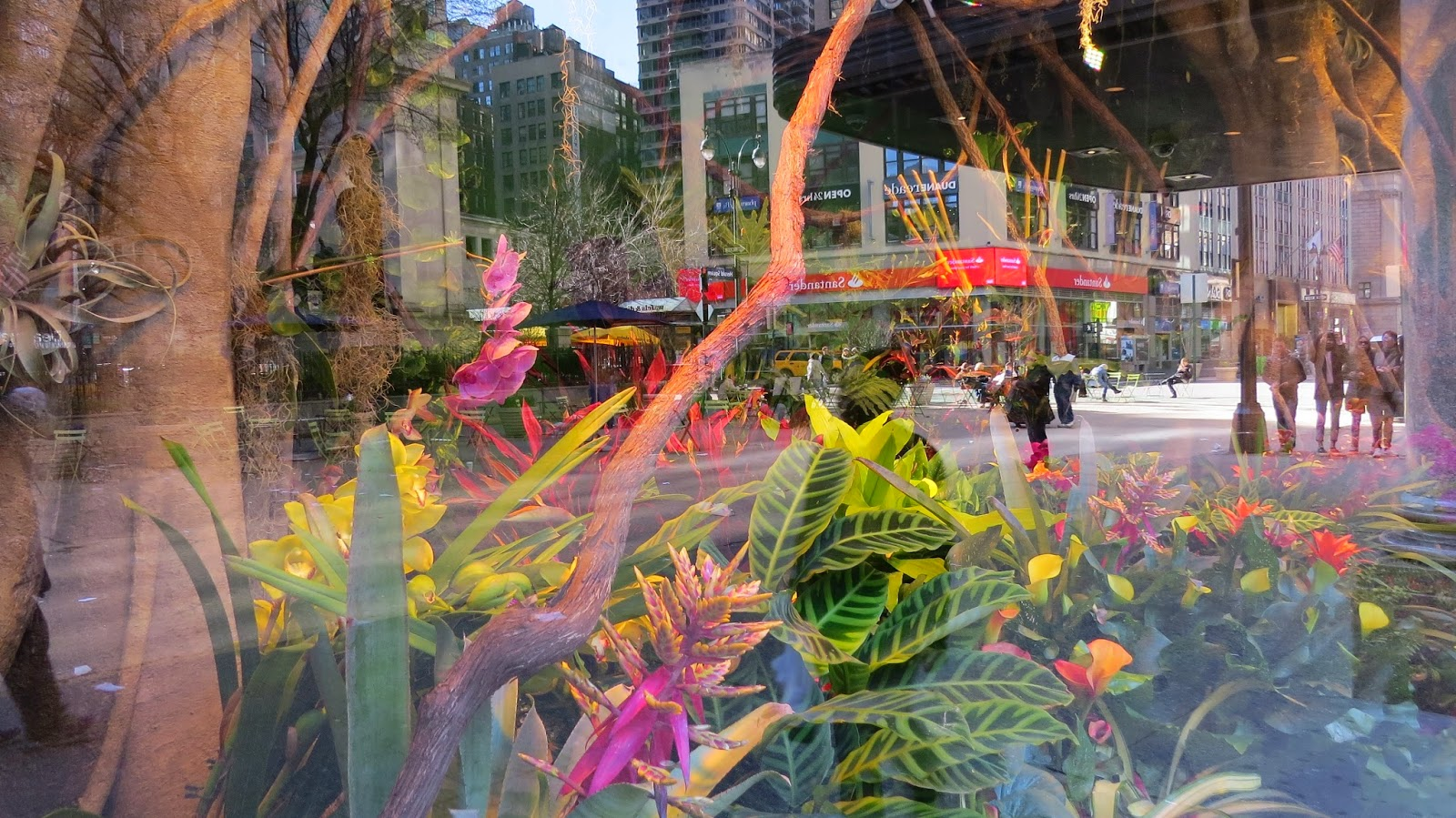 Reflections-on-The-Macy's-Flower-Show