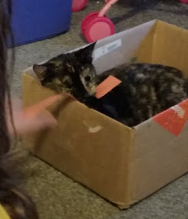 cat in science project box 2