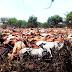 Picha 8: KILICHOWAKUTA WAFUGAJI BUSEGA, Zaidi ya Ng'ombe 4000 wakamatwa ndani ya hifadhi...