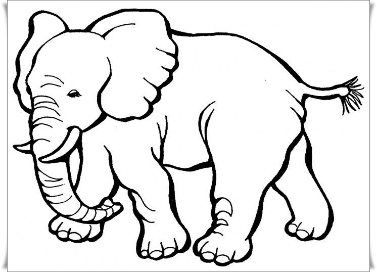 ausmalbilder zum ausdrucken: ausmalbilder elefant