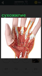Схематическое изображение сухожилия на человеческой руке