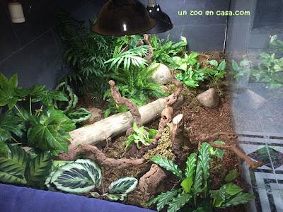 Terrario para tortugas