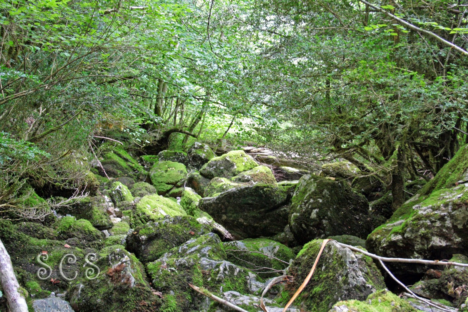 Camino hacia la Cueva del Ibon (Navarra, España)