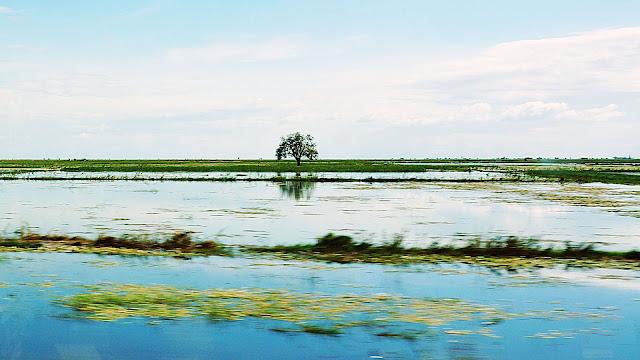 Изображение равнины, залитой водой, с деревом в далеке