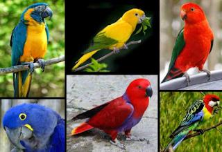 Suara Burung Nuri Gacor Untuk Masteran