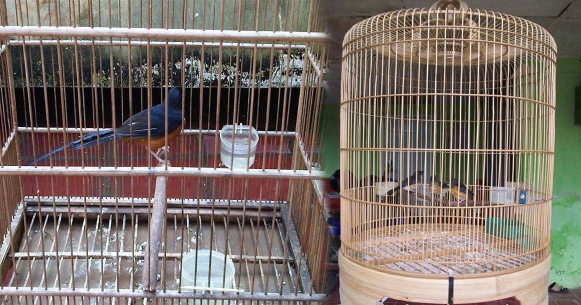 Tips Membuat Kandang (Sangkar) Ternak Burung Murai Batu ...