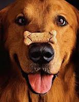 comment bien dresser son chien