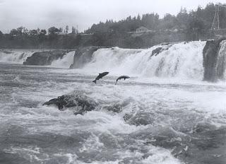 Zona de las Cascadas, río Columbia