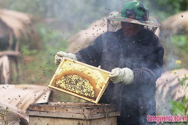 Mật ong bạc hà bao nhiêu tiền 1 lít