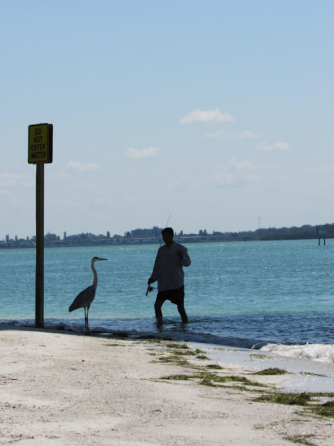 Fishing with a Blue Heron in Sarasota Florida by Beth Ann Strub