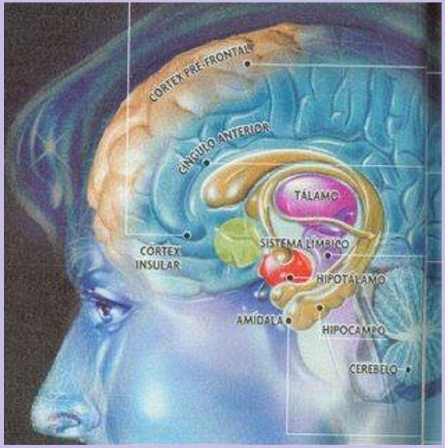 Ashamel Lemagsa: El papel de la amígdala en las emociones.