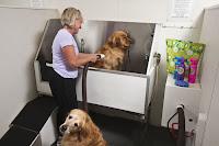 banho e tosa de cães grande porte