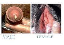 Nanah Pada Pria Dan Wanita