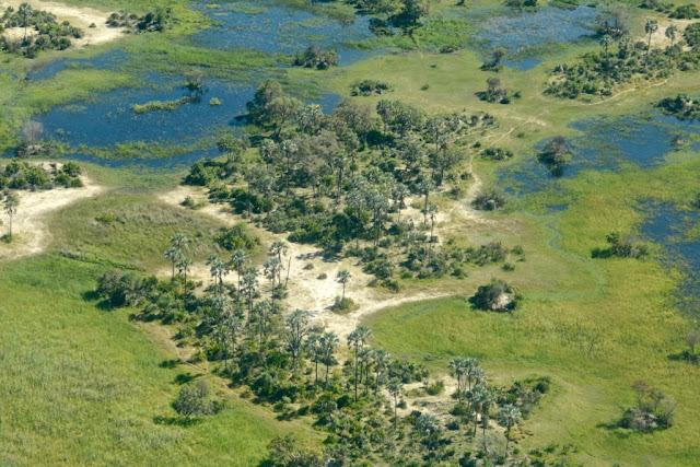 Botswana, Okavango Delta, rieviermonding, Afrikaans landschap, Afrika, Zuidelijk Afrika, groen, safari, wildlife,