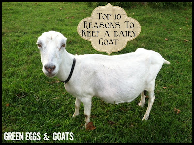 Top 10 reasons to keep a milk goat