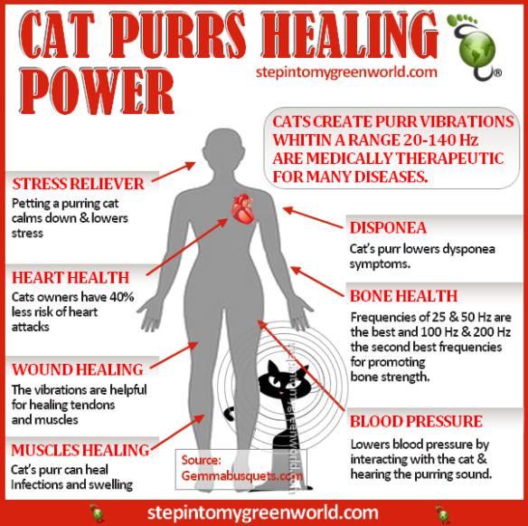 can cats eat sugar