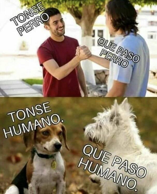 Tonse perro 2019