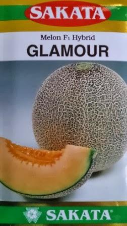 Melon, Sakata Glamour, Melon Orange, Harga Murah