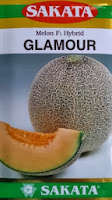 melon, melon glamour, melon sakata glamour, melon f1 glamour, benih melon