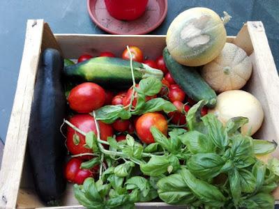 Coltivare meloni nell'orto biologico: il raccolto di agosto