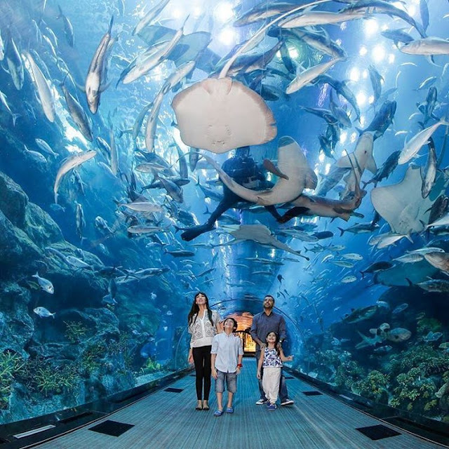 OMG beautiful Dubai Aquarium,things to do in dubai,dubai attractions map video coupons tickets 2016 packages and prices for families in summer,dubai destinations to visit and landmarks map airport,dubai airport destinations map,dubai honeymoon destinations,cobone dubai destinations,dubai holiday destinations,things to do in dubai airport for a day at night with kids 2016 layover in summer during ramadan with family